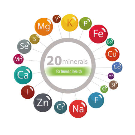 20 minerals: microelements and macro elements, useful for human health. Fundamentals of healthy eating and healthy lifestyles. 向量圖像