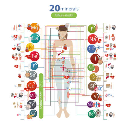 Human health and minerals. 20 minerals: microelements and macro elements and their effect on the health of the organs of the human body.