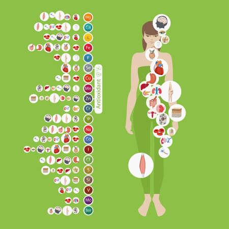 Menselijke gezondheid en mineralen. 20 mineralen: micro-elementen en macro-elementen en hun effect op de gezondheid van de organen van het menselijk lichaam. Stock Illustratie