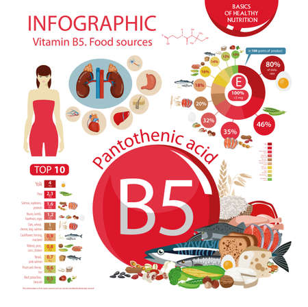 Vitamin B5 (Pantothenic acid). Food sources. Natural organic products with the maximum vitamin content. Illustration