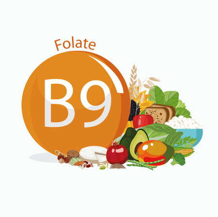 Vitamin B9 (folate). Food sources. Natural organic products with the maximum vitamin content. Ilustrace