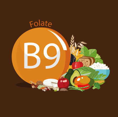 Vitamin B9 (folate). Food sources. Natural organic products with the maximum vitamin content. Vectores