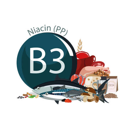 Vitamin B3 (PP). Foods with the maximum vitamin content. Basics of dietary nutrition Çizim