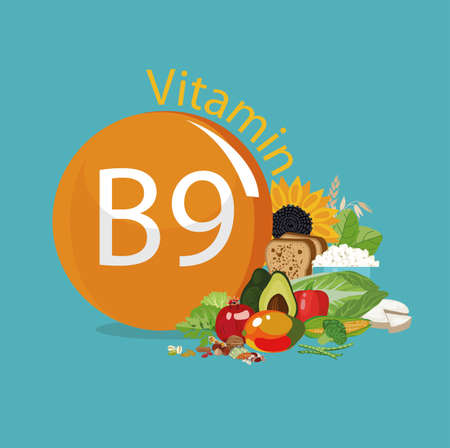 Vitamin B9 Food sources. Natural organic products with the maximum vitamin content.