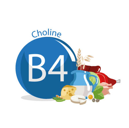 Vitamin B4 (Choline). Food sources. Natural organic products with the highest content of vitamin B4. Stock Illustratie