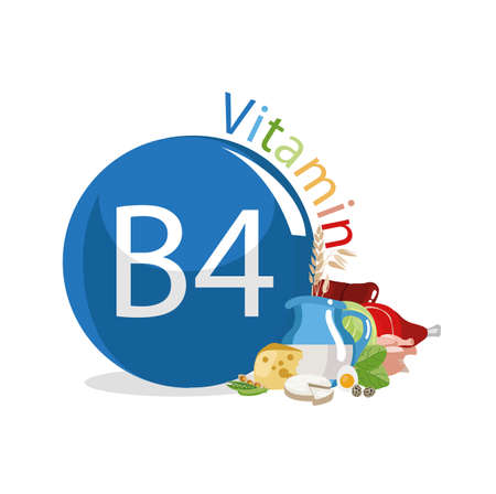 Vitamin B4 (Choline). Food sources. Natural organic products with the highest content of vitamin B4. Illustration