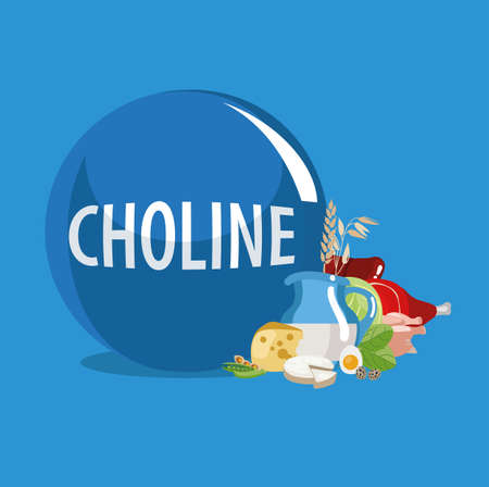 Choline (Vitamin B4). Food sources. Natural organic products with the highest content of Choline. Vectores