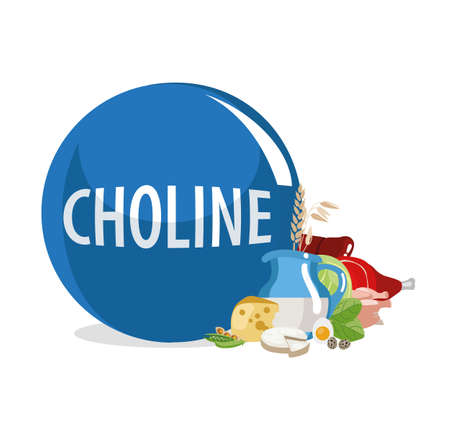 Choline (Vitamin B4). Food sources. Natural organic products with the highest content of Choline. Ilustração