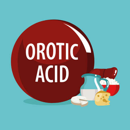 Orotic acid (vitamin B13). Natural organic products (dairy products, offal) with the highest content of Orotic acid.