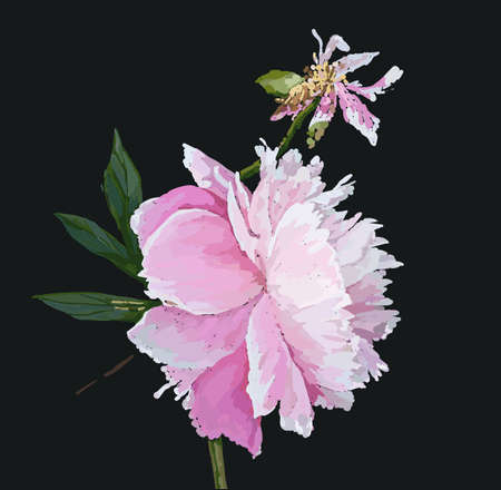 A picturesque peony flower. Seasonal flower. Inflorescence and leaves. Hand drawing in a vector format. Vetores
