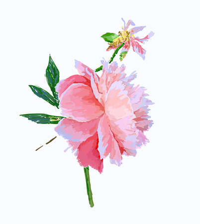 A picturesque peony flower. Seasonal flower. Inflorescence and leaves. Hand drawing in a vector format. Фото со стока - 129767226