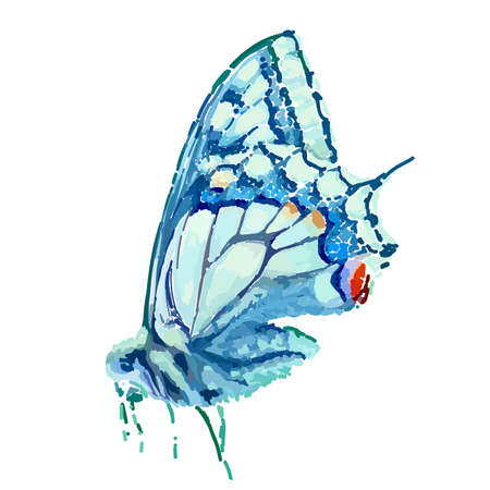 Blue Butterfly. Painting in vector format. Иллюстрация