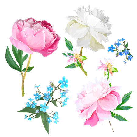 Peonies, forget-me-nots. Scenic image of flowers in vector. Иллюстрация
