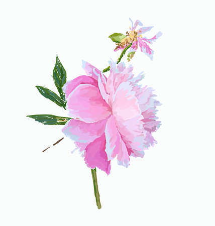 A picturesque peony flower. Seasonal flower. Inflorescence and leaves. Hand drawing in a vector format. Фото со стока - 129767313