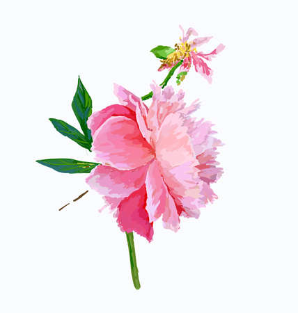 A picturesque peony flower. Seasonal flower. Inflorescence and leaves. Hand drawing in a vector format. Фото со стока - 129767338
