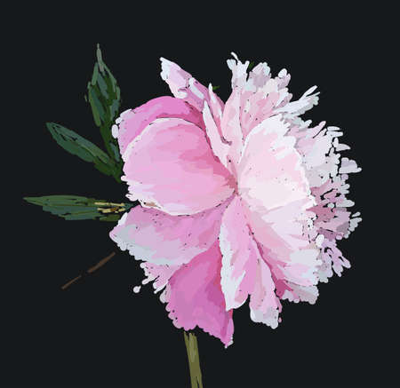 A picturesque peony flower. Seasonal flower. Inflorescence and leaves. Hand drawing in a vector format. Фото со стока - 129767346