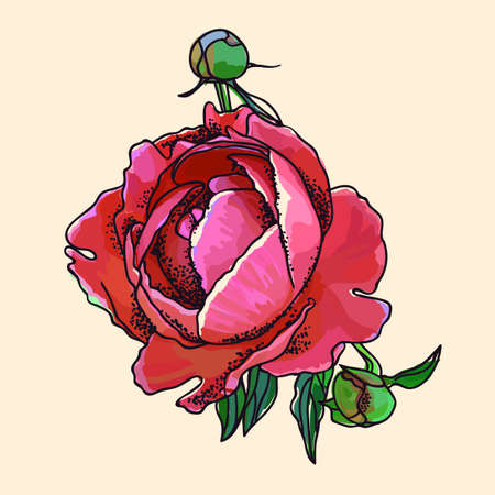Picturesque drawing of a flower of a peony. Ilustrace