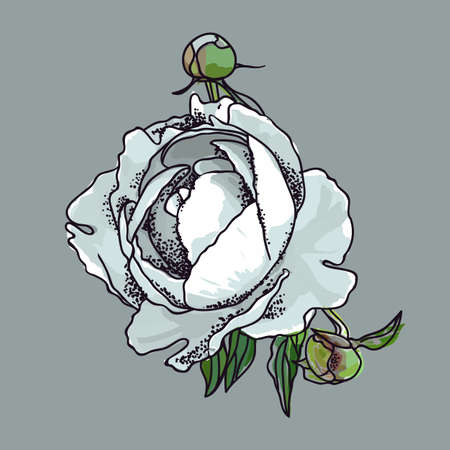 Picturesque drawing of a flower of a peony. White Фото со стока - 129767574