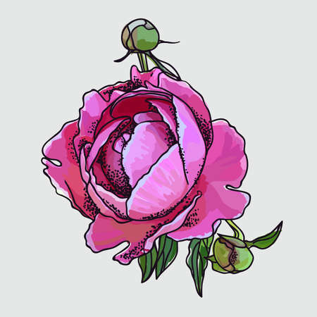Picturesque drawing of a flower of a peony. Pink Ilustracja