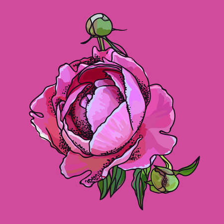 Picturesque drawing of a flower of a peony. Pink Ilustrace