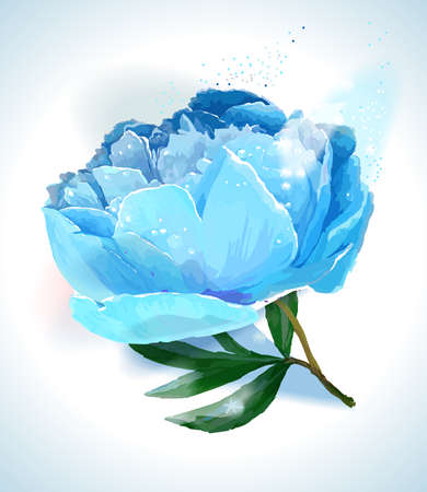 A flower of the garden peony. Vector illustration. White background, blue flower Ilustracja