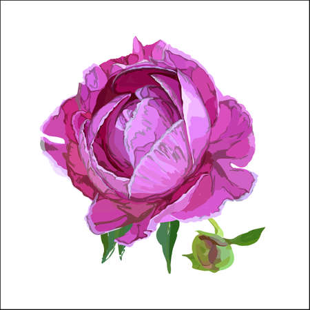 Picturesque drawing of a flower of a peony. Pink Фото со стока - 129767698