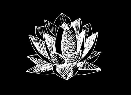 Dessin au trait de fleur de lotus. Noir et blanc