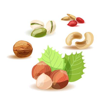 Nüsse. Satz verschiedene Nüsse auf weißem Hintergrund.