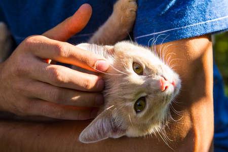 赤猫 luxuriates し、太陽の下で男の手で目を凝らす 写真素材