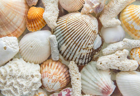 thin shell: light background texture of sea shells and coral