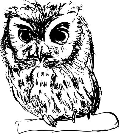 disheveled: Hand drawn sketch of an owl vector illustration
