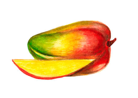 Mango fruit vector illustration painted with watercolor pencils