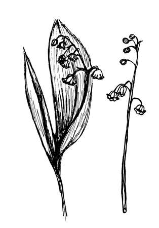 lily of the valley: Sprigs of lily of the valley blooming with leaves Vector Graphics Ink