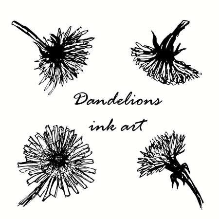 ink sketch: dandelions ink hand drawn sketch illustration Illustration