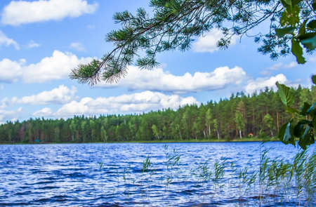 summer trees: background forest lake surrounded by pine trees Stock Photo
