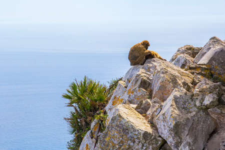 sylvanus: A pair of monkeys resting on top of the Rock of Gibraltar