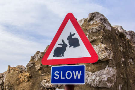 cross street with care: background road sign slow with the image of wild animals - rabbits in Gibraltar