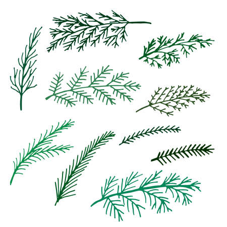 delicate thin spruce green branches isolated set of hand-drawn vector illustration