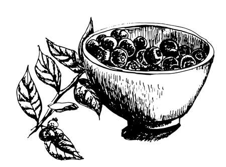 blueberries: cup filled with fresh blueberries and a sprig of blueberries, sketch