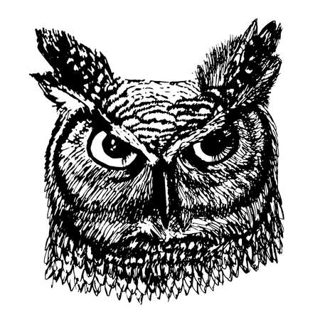 head wise: Angry long-eared owl with colorful feathers sketch  illustration Illustration