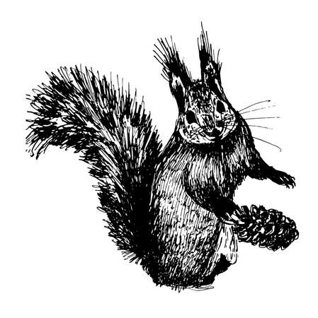 downy: small furry squirrel sketch hand-drawn ink illustration Illustration