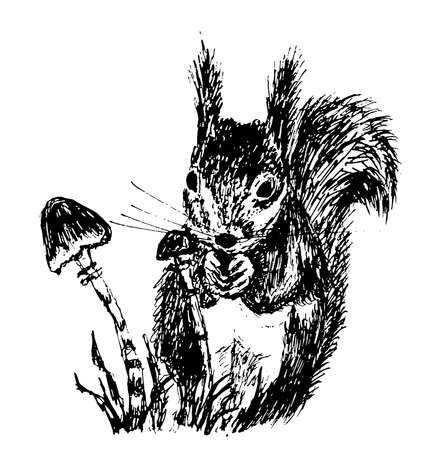 small squirrel sketch ink illustration