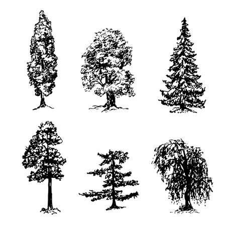 collection d'éléments de différents types d'arbres dessin graphique croquis d'encre
