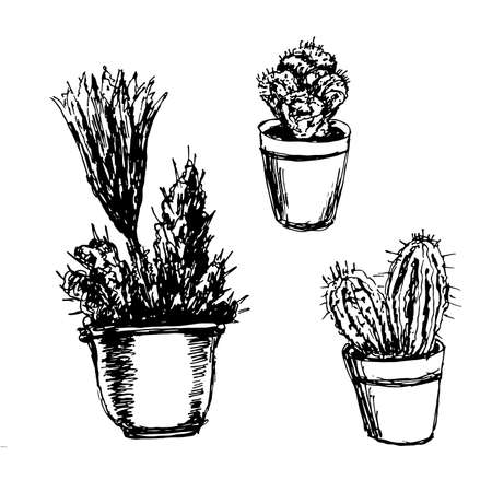 cacti in pots sketch illustration