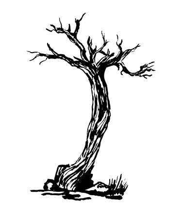 gnarled: drawing old dry gnarled tree isolate sketch illustration