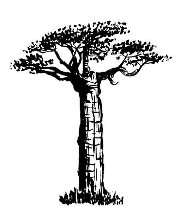 ink sketch: drawing old bottle tree graphic ink isolate sketch illustration