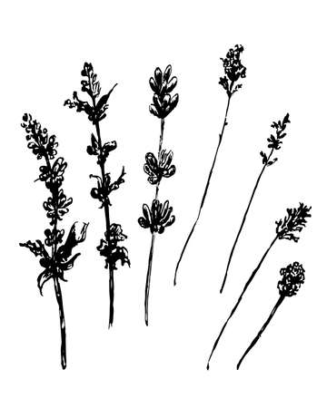 tarragon: drawing forest grasses, set of illustration