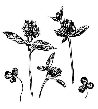 herbaceous: clover flowers and leaves, set sketch illustration Illustration