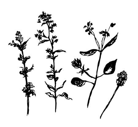 drawing set of forest grasses, isolated graphic  illustration Illustration