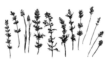 Wald und Wiesengräser Skizze Abbildung